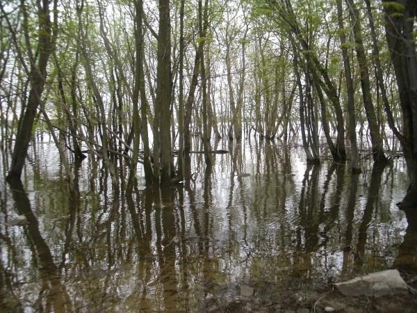 Terrain inondé en bordure du Lac St-Pierre