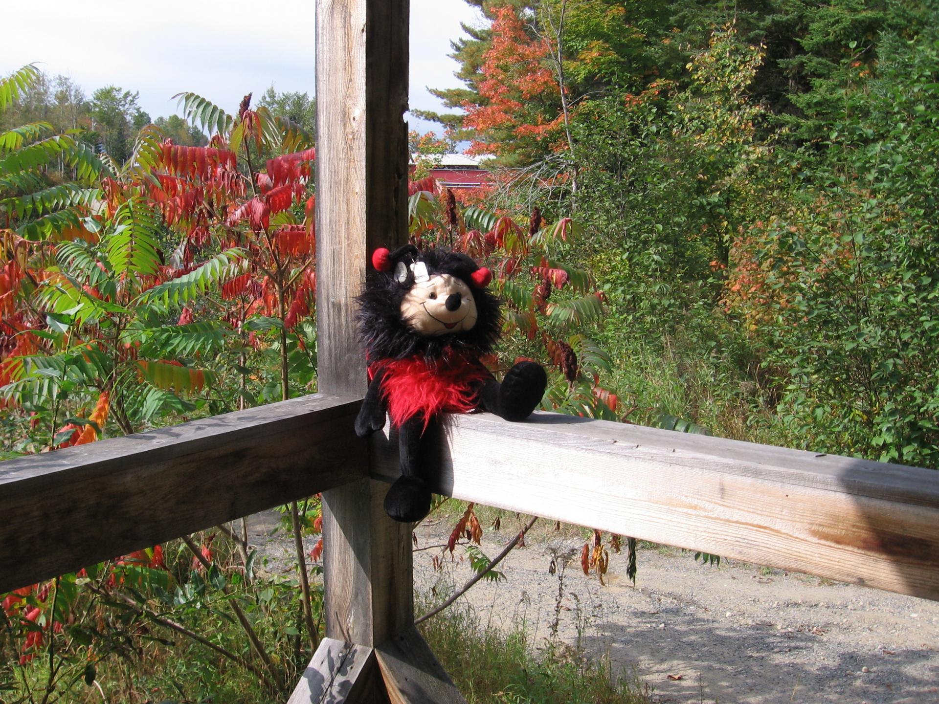 Travel Ladybug Nelle